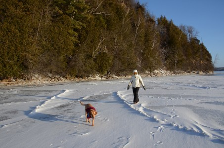 Piper Photo Dog on Lake Champlain ice Shelburne, Vermont.