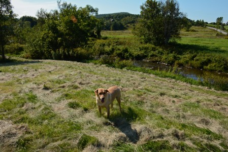 Piper Photo Dog adventure in Charlotte, Vermont.