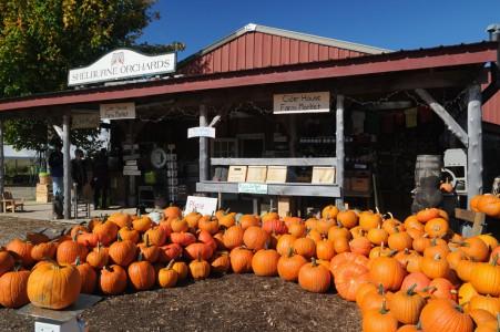 Shelburne Orchards pumpkins Shelburne, Vermont.