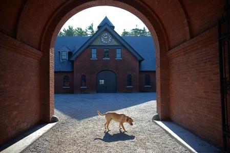 Piper Photo Dog Shelburne Farms adventure Shelburne, VT.