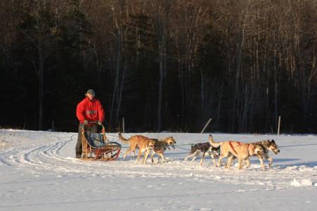 Dogsledding at Eden Mountain Lodge in Eden, Vermont