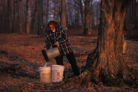 Collecting maple sap in Fairfield, Vermont