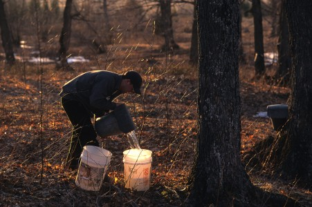 Sugar maker collecting maple sap in Fairfield, Vermont