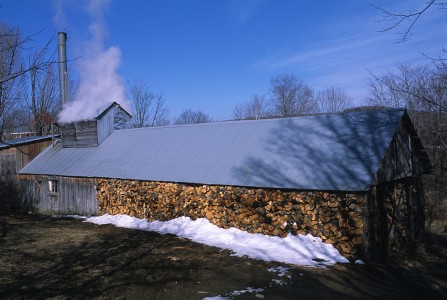 Steam rising from sugarhouse boiling maple tree sap into maple syrup in Fairfield, Vermont.