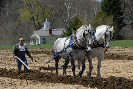Man competing with draft horses during the Plowing Match at Billings Farm and Museum in Woodstock, Vermont
