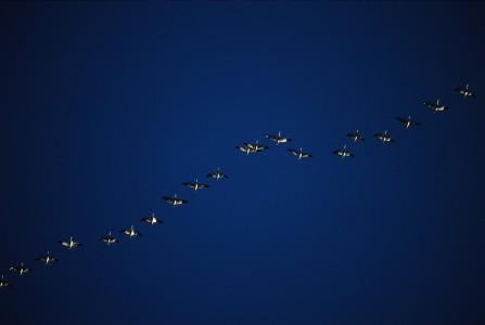 Birds fly overhead in South Burlington, Vermont