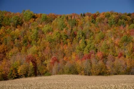 Fall foliage Albany, Vermont.