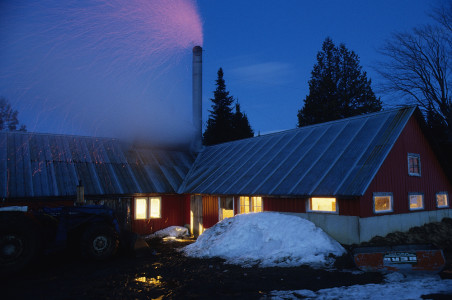 Sugar house with evaporator at full boil shooting embers out of the chimney in Holland, Vermont